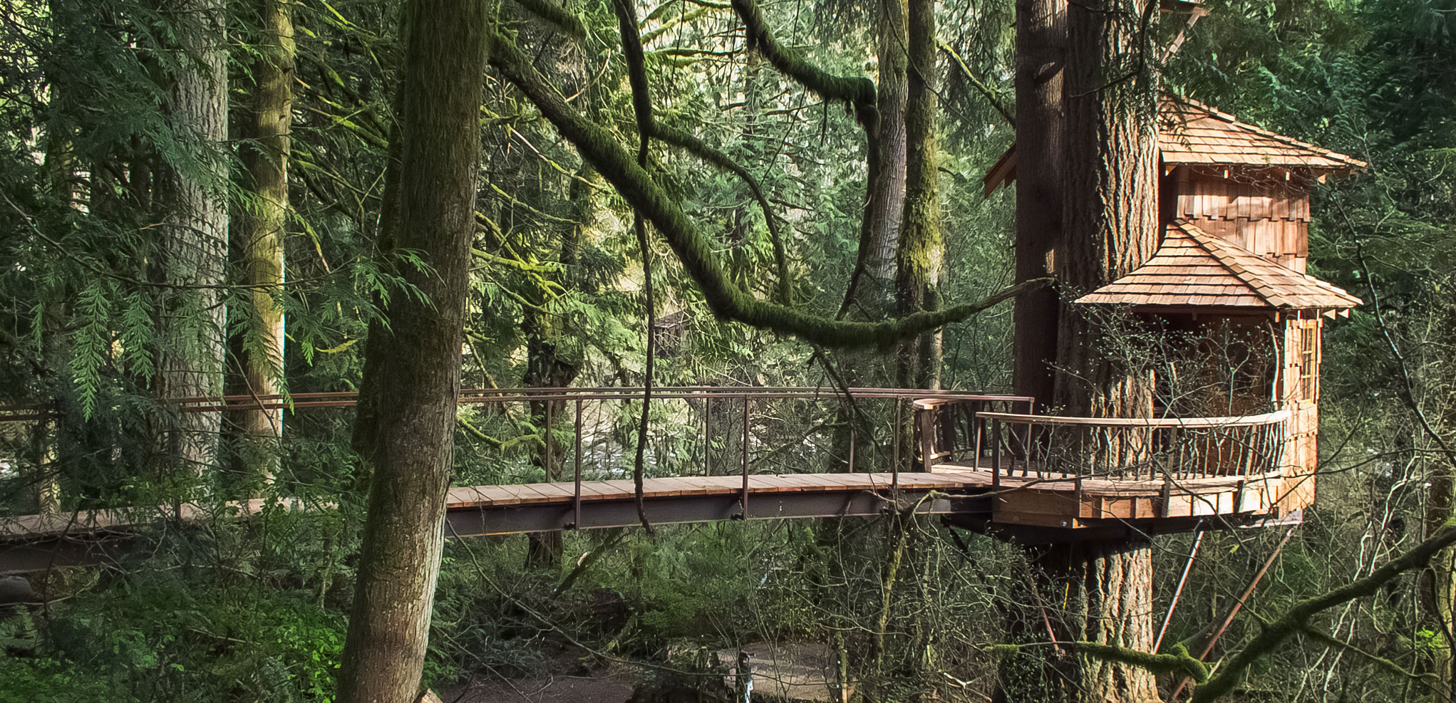 Lodging at  Treehouse Point in Fall City Washington