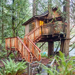 Our Treehouses